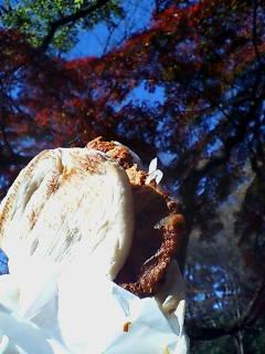 タンドリーチキンナンと紅葉