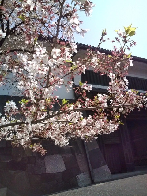 桜田門の桜