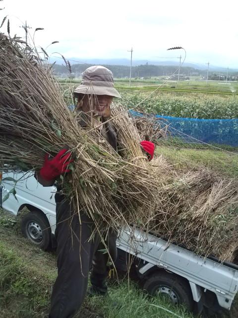 麦刈り終了