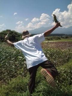 トウモロコシと八ヶ岳