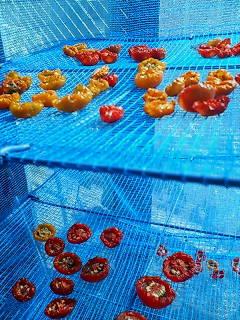 ドライトマト製作中