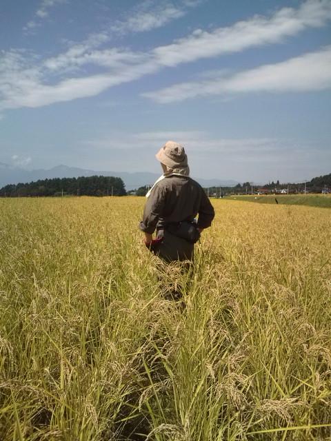 金色の野に降り立つ