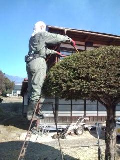 植木職人体験