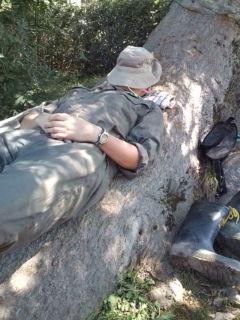 木の根で寝る
