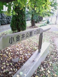 小金井公園到着!